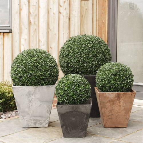 Topiary buxus balls in synthetic planters