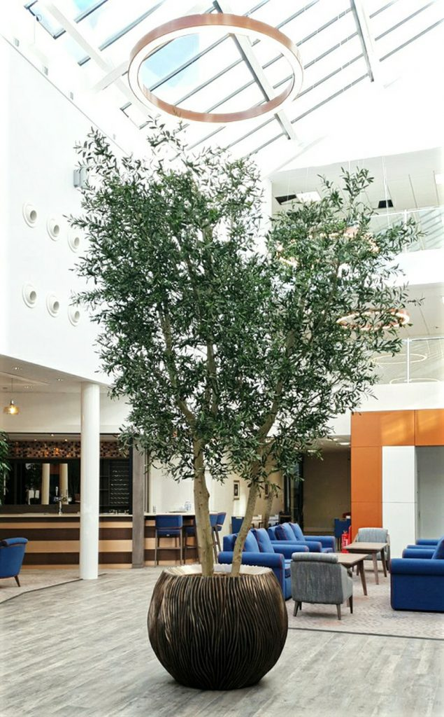 4 Metre Artificial Olive Tree in an Ascot planter