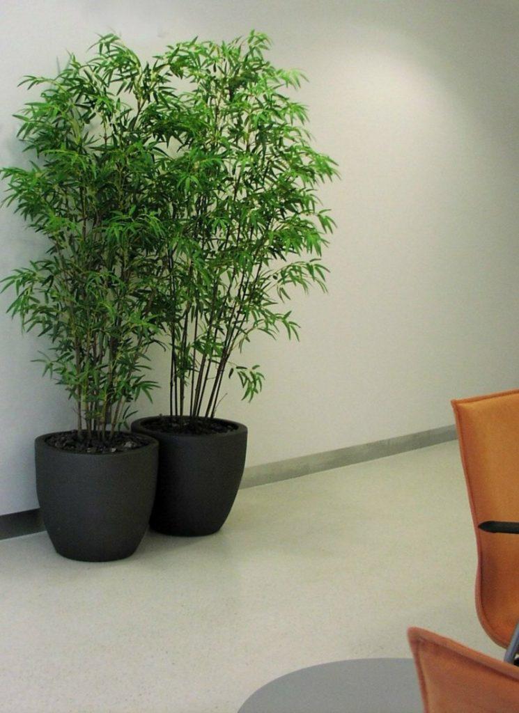 Artificial Bamboo in ceramic couple