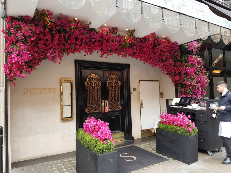 Artificial Bourgainvillea Display for Chelsea flower show