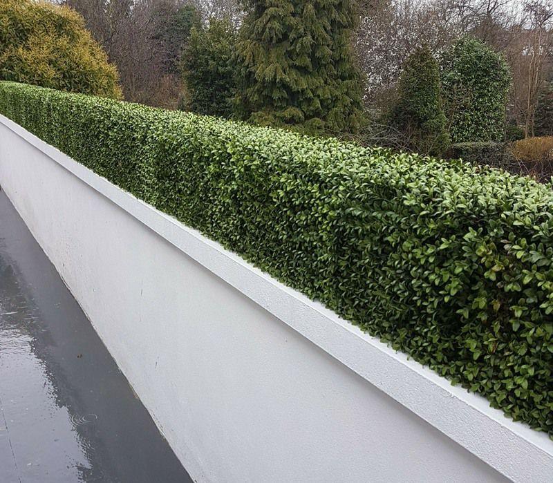 Artificial Boxwood Hedge Exterior