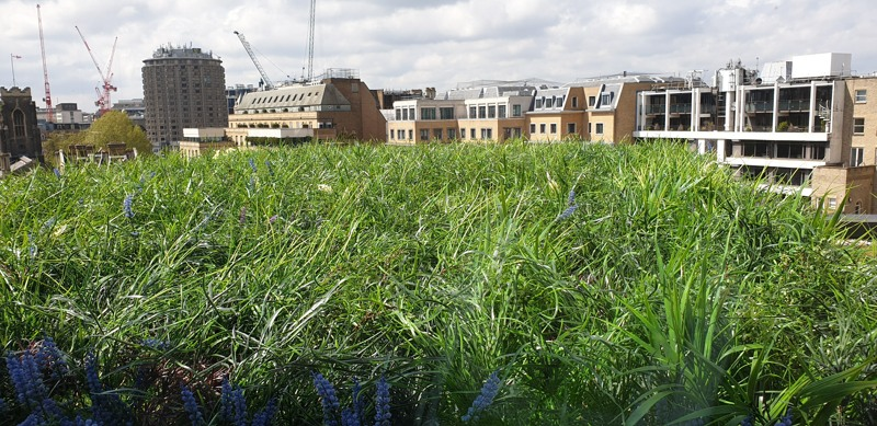Artificial Green Roof in London