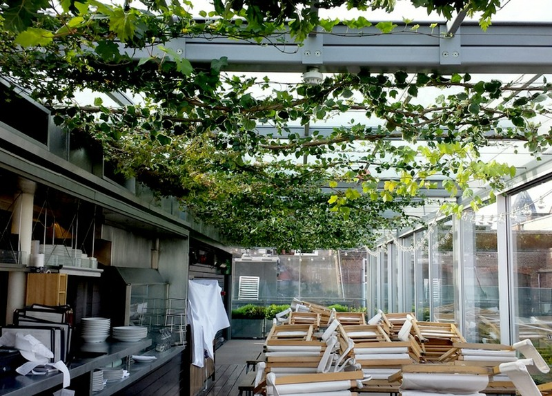 Artificial Ivy and Grape vines