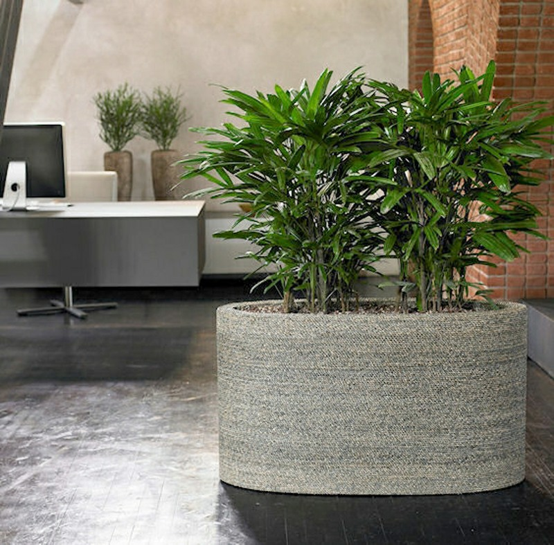 Artificial Rhapis palm in Oval planter