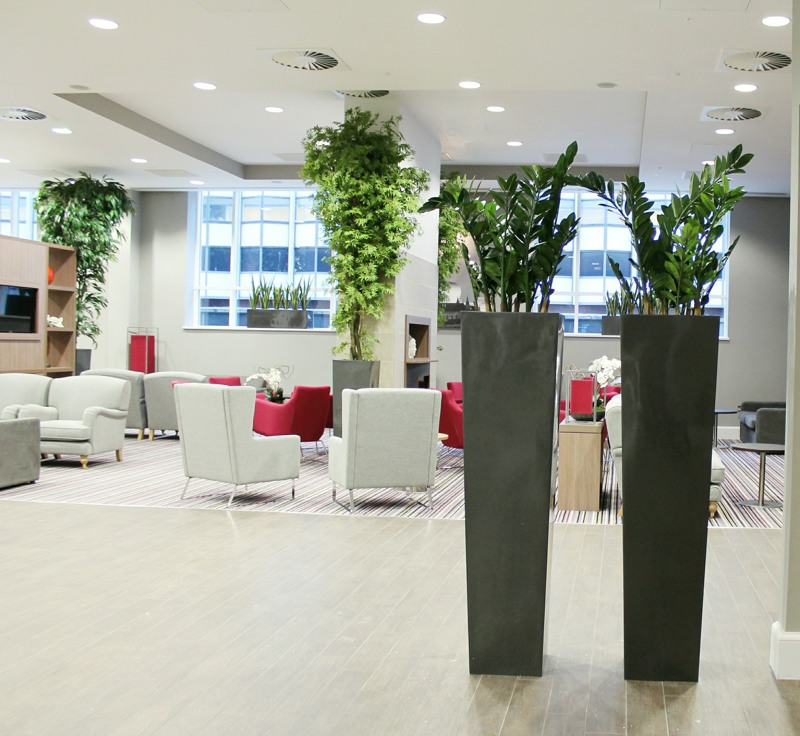 Artificial Zamioculcas in large planters