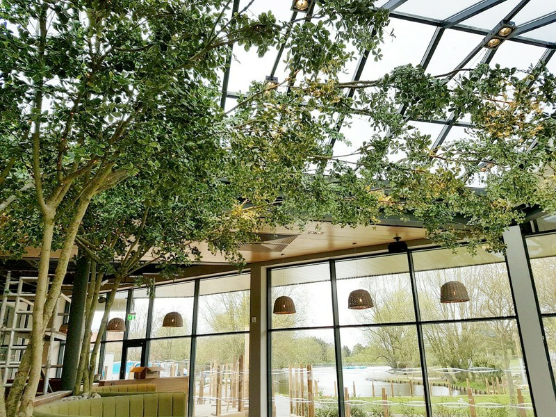 Artificial black olive tree with varu foliage and extended branches across the ceiling