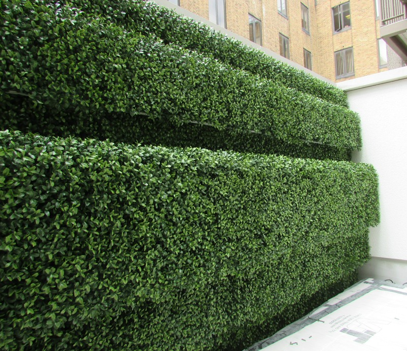 Artificial boxwood hedge outdoor