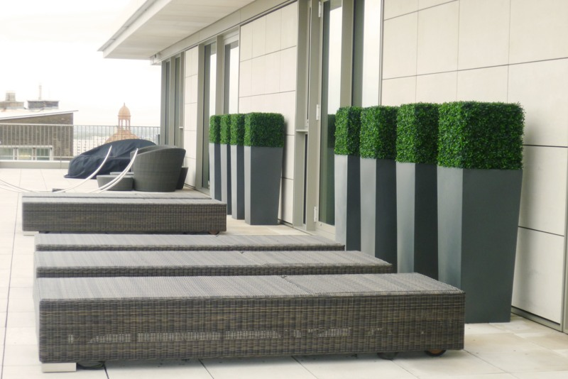 Artificial buxus cubes in planters