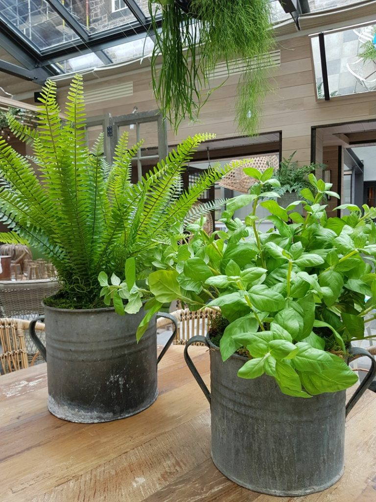 Artificial fern and basil in metal planter