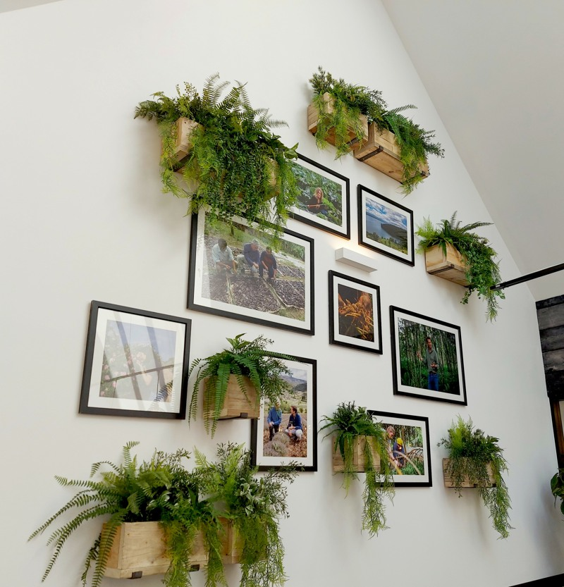 Artificial ferns in small wooden troughs on wall
