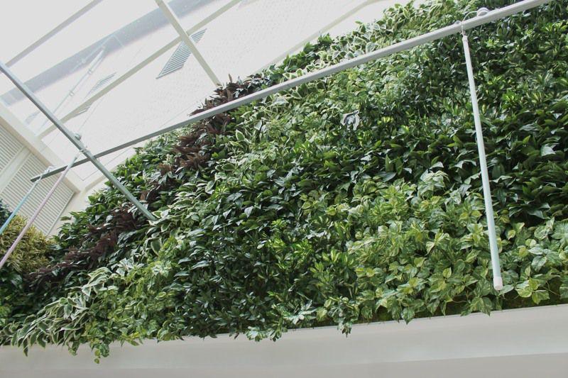Artificial green wall shopping centre 2