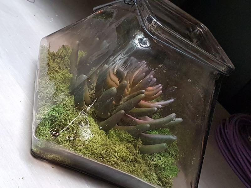 Artificial succulent in glass jar