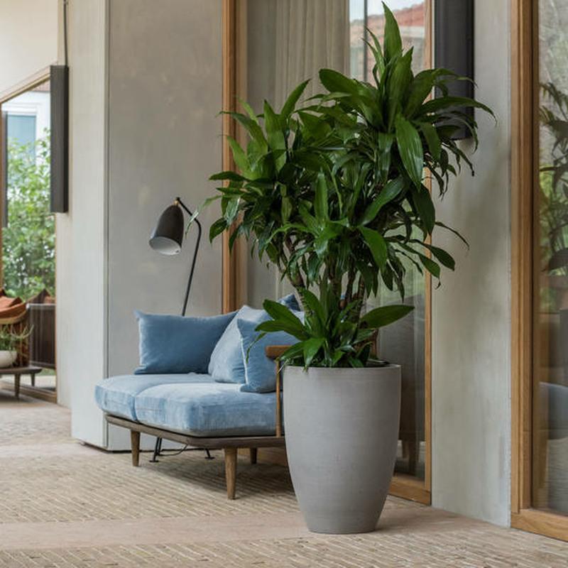 Ben stone resin planter plante with Dracaena