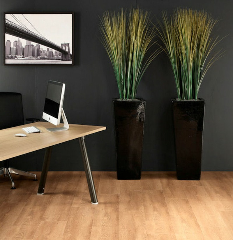Black tall planters with tall grasses for office