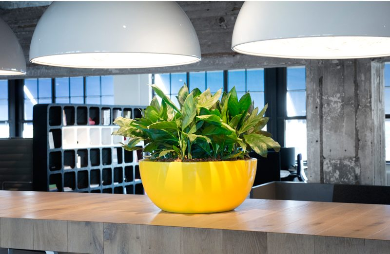 Colourful cabinet top bowl with foliage for office