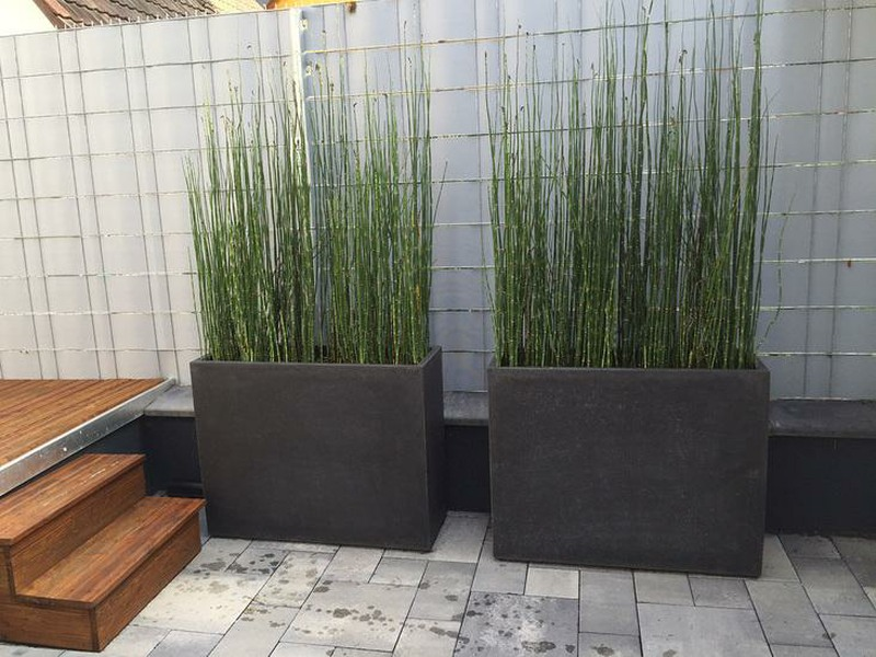Division trough with tall grasses