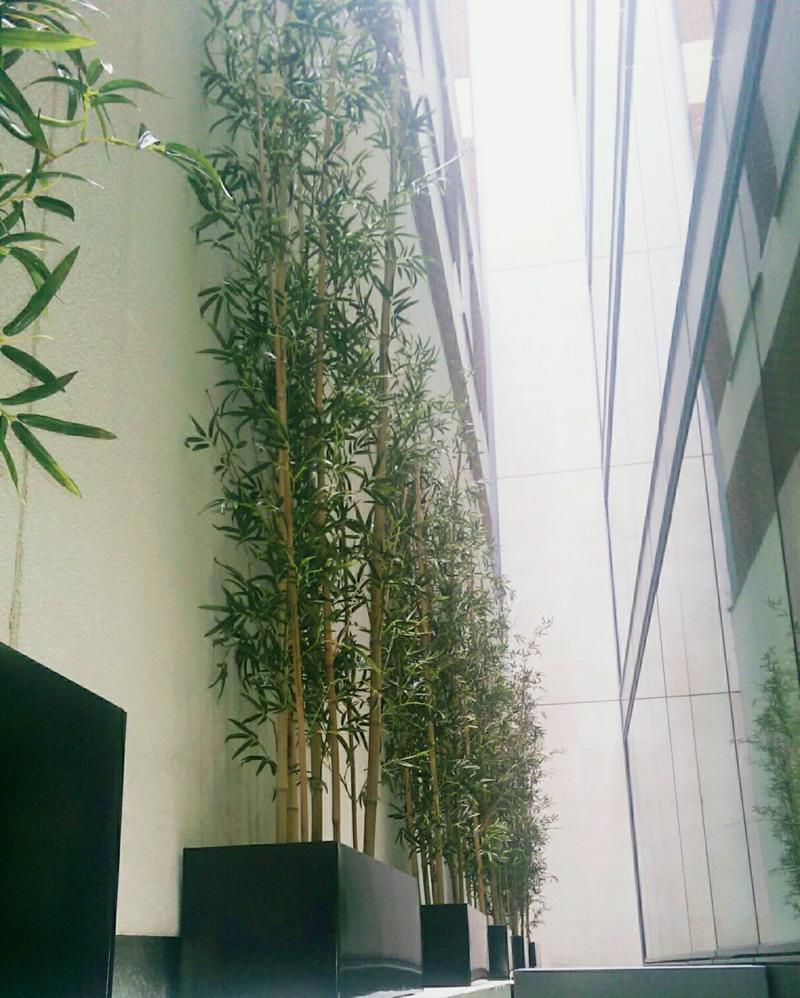 Fake 3 metre Bamboo with premium foliage