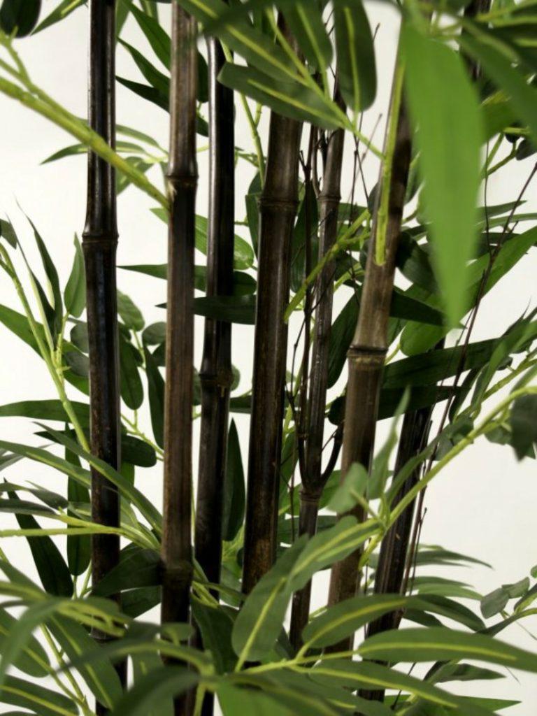 Fake Black Bamboo close