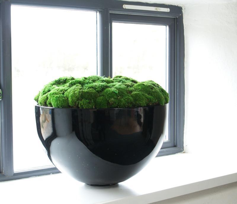 Giant Bowl of Bun moss 1