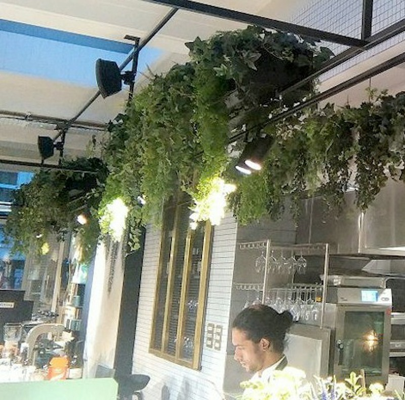 High level planting of ivies ferns and vines for Red Roaster Brighton