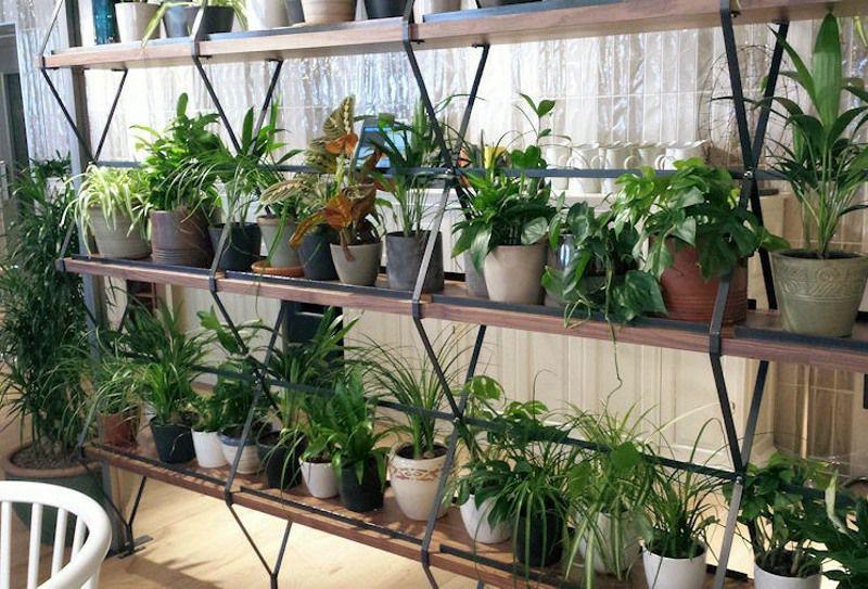 Live Plants in Pots Shelf Sized