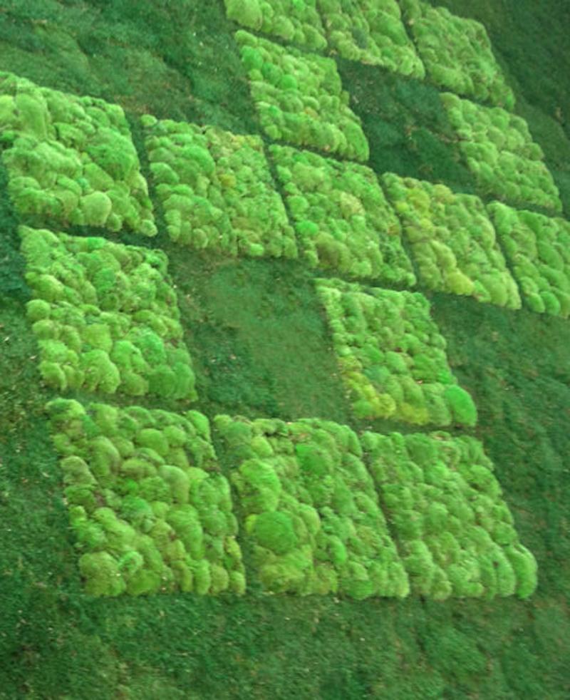 Moss Art Flat and Bun