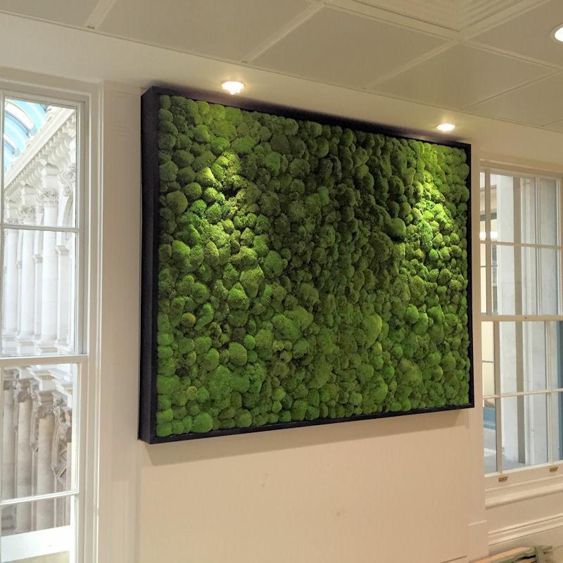 Moss framed