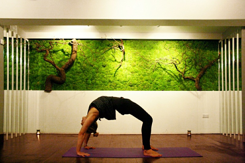 Moss wall with natural stems in Yoga Studio