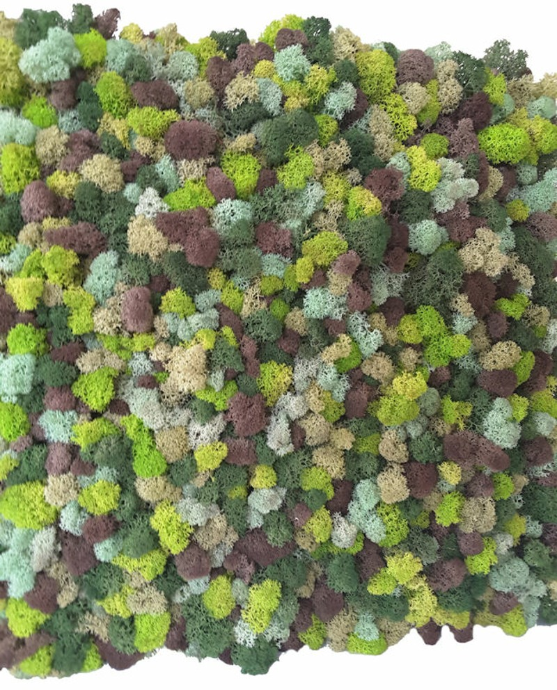 Multicoloured Reindeer Moss Sample