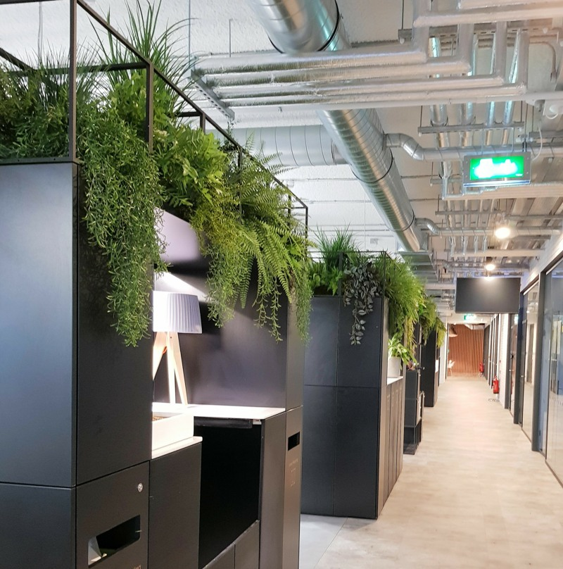 Office high level planting with ferns and vines