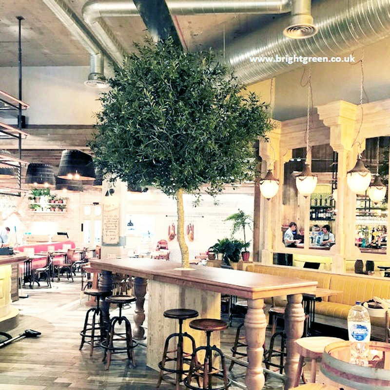 One Concept olive tree Square