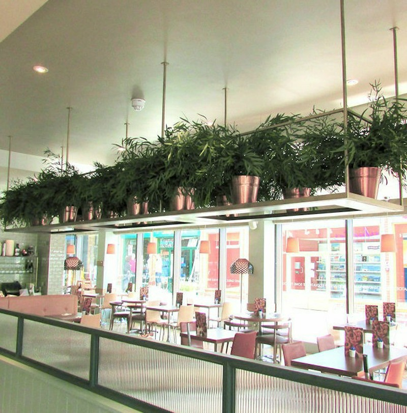 Pots of Preserved Nicoly foliage for restaurant