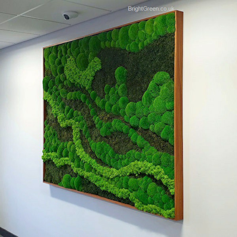 Preserved Moss Art in Walnut Frame