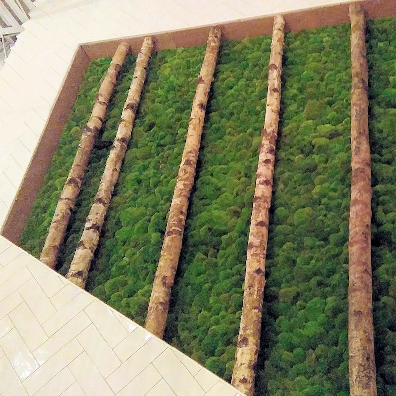 Preserved moss wall with silver birch stems
