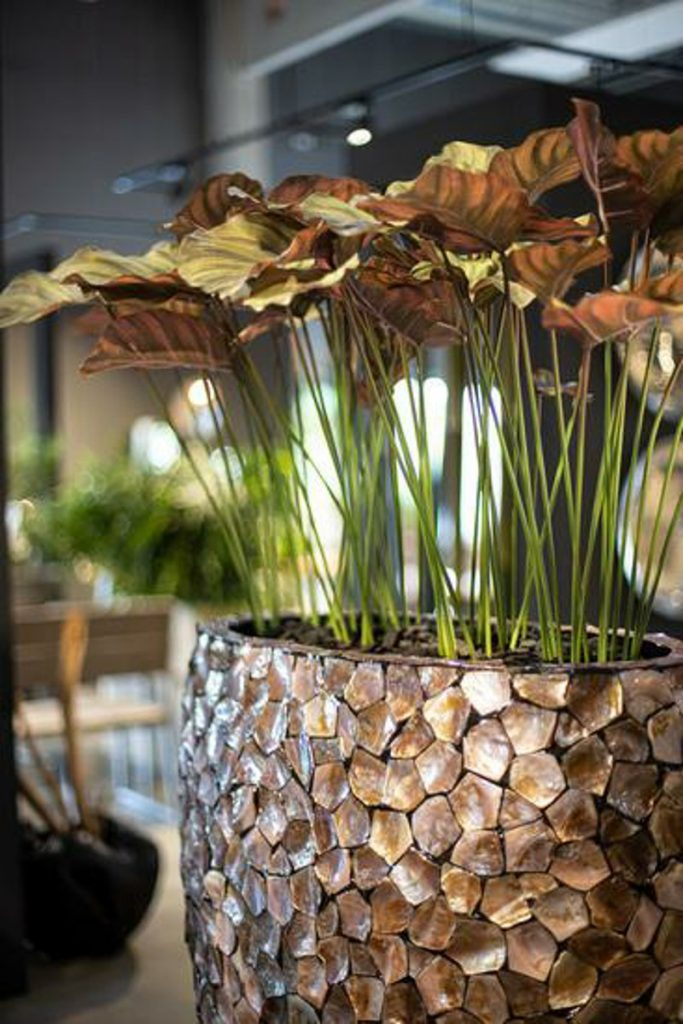SHELL planter brown mother of pearl
