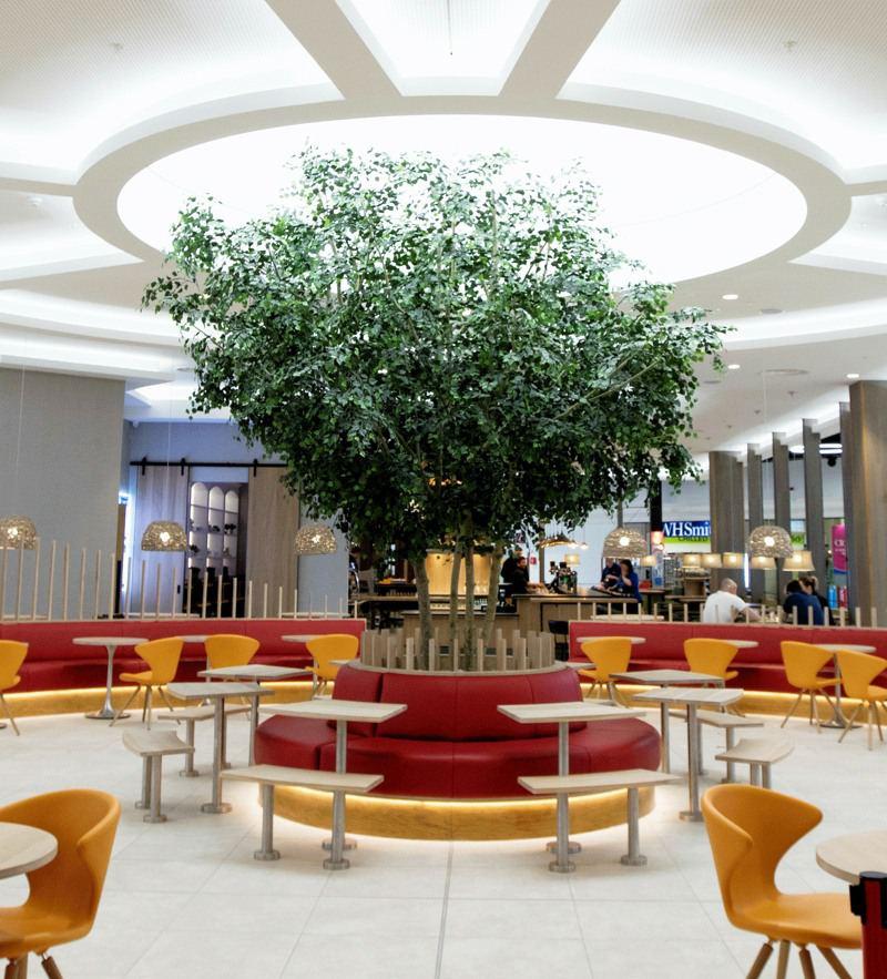Shannon Airport specimen tree_