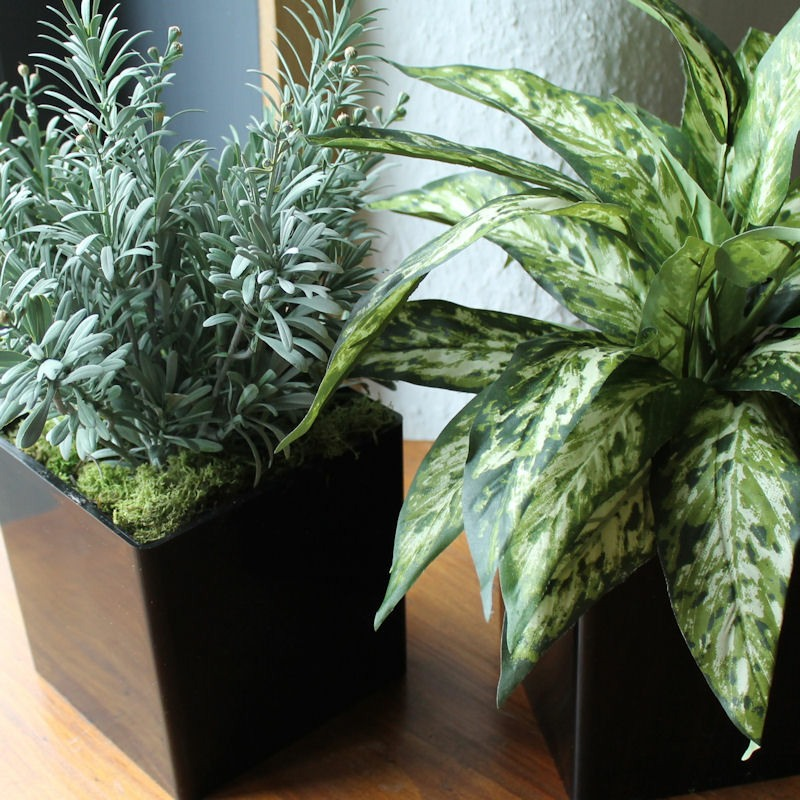 black cube plant pots with fake evergreen and Artemesia