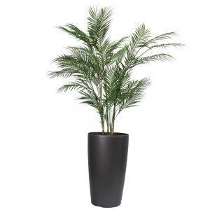 fs streamline graphite classic chamaedorea palm