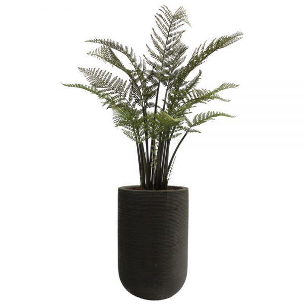 fs urban black tall fern classic