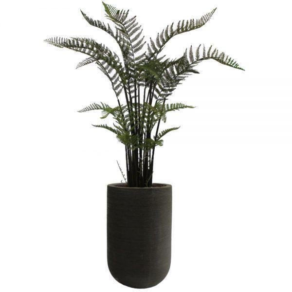 fs urban black tall fern large