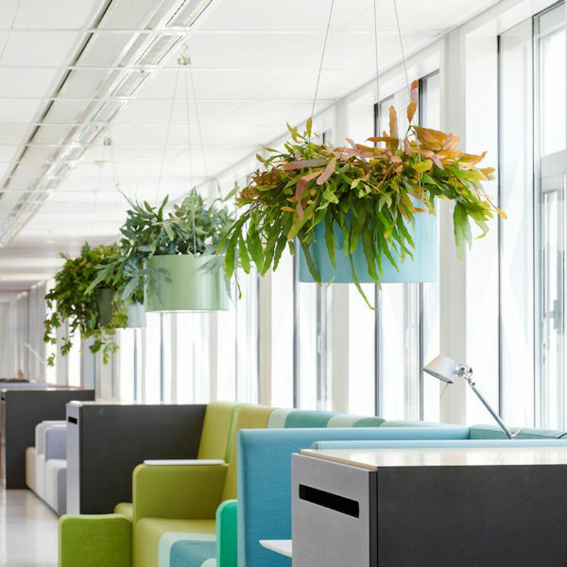hanging ferns and succulents in large planters