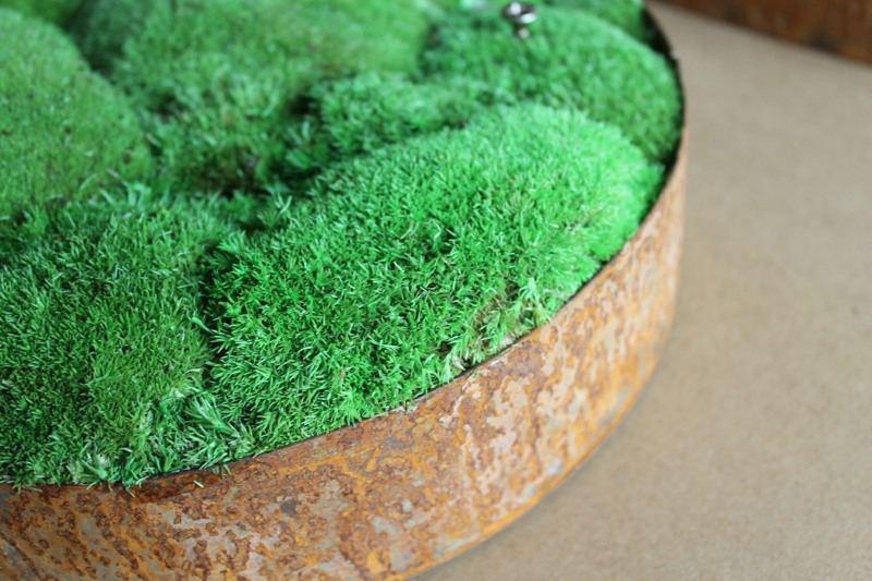 preserved bun moss detail