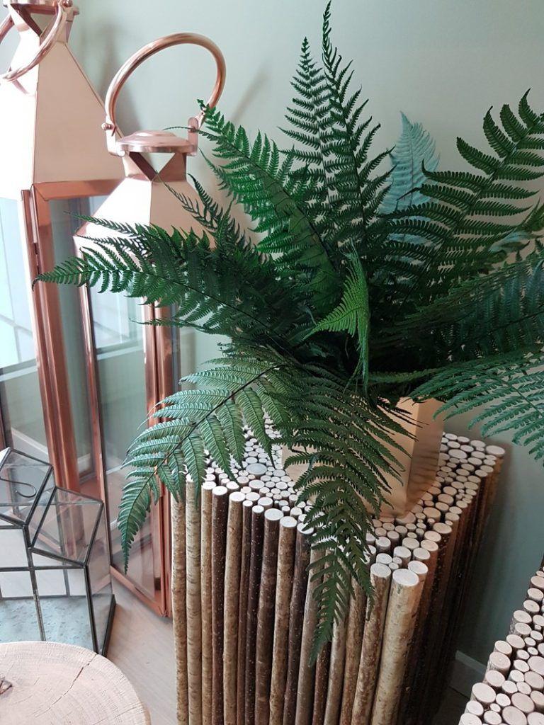 preserved fern on wooden pedestal