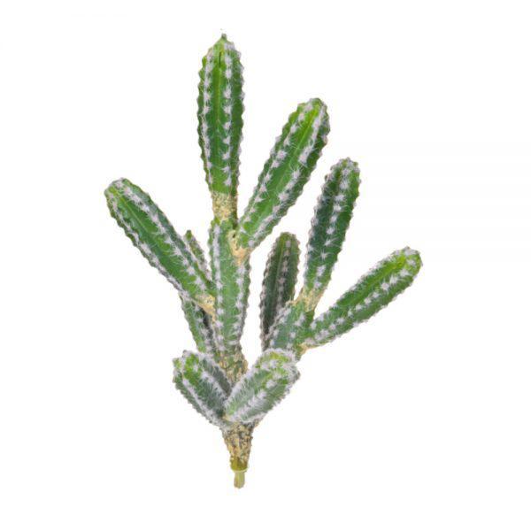tt cactus