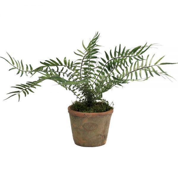 tt natural terracotta blechnum fern