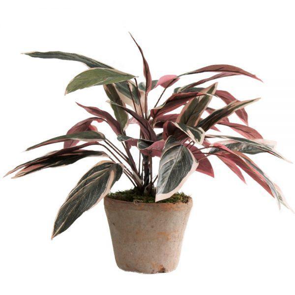 tt natural terracotta caladium pink