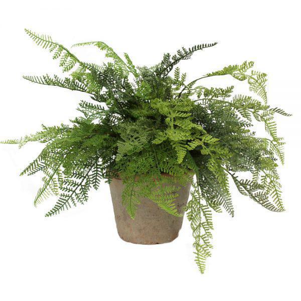 tt natural terracotta forest fern