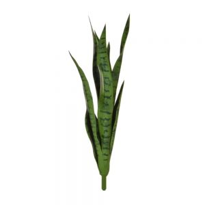 tt sanseveria green
