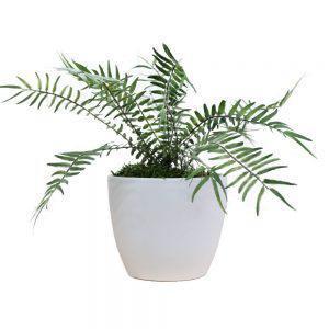 tt streamline white blechnum fern