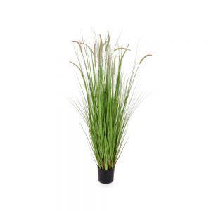 fs dogtail grass